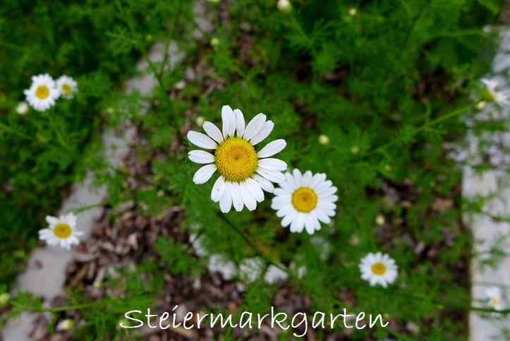 Bertram-Steiermarkgarten
