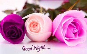 3 Beautiful Good Night Flowers