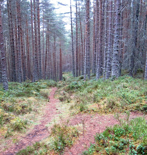 Deeside walks: the path through the trees on Pannanich, Ballater