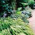 Plantas para zonas sombrías