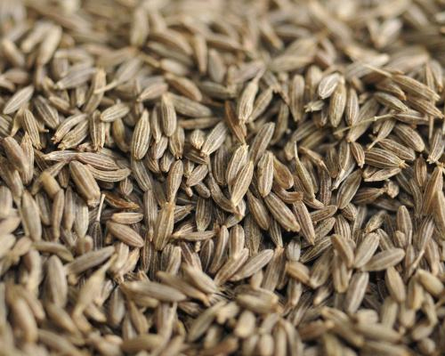 Agri commodity Calls, Castor Seed, Intraday Trading Tips, Mcx Commodity Tips, Mcx Tips,
