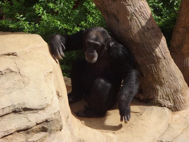 A Trip To The Zoo | Bioparc Fuengirola 8