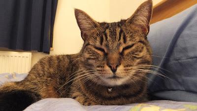 Cat Longjump