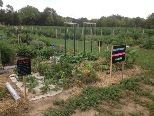 Wagner Feed Wagner Farm's Demo Plot In The Community Garden