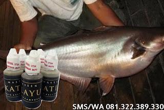 Umpan Untuk Ikan Patin Master Essen Katilayu