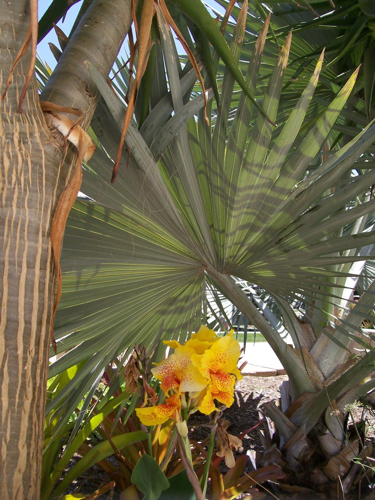 Intuitive Value: San Diego Vacation - Balboa Park Botanical Bldg ...