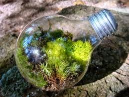 A construção de um terrário é uma atividade prática que auxilia na apropriação de conceitos ecológicos