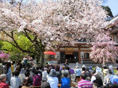 鎌倉長谷寺の花まつり