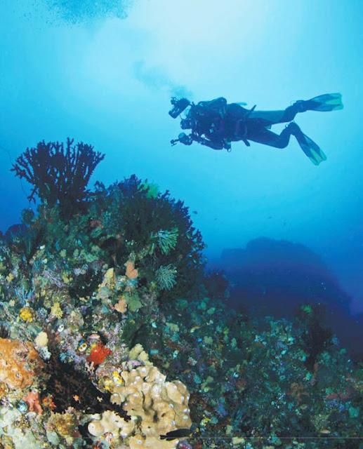 Terumbu karang laut Ambon