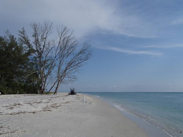 Shark's Tooth Beach
