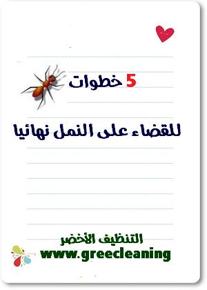 5 خطوات للقضاء على النمل نهائيا