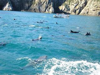"""VÍDEOS: Grupo de 40 golfinhos é visto nos """"baixios"""" em Arraial do Cabo"""