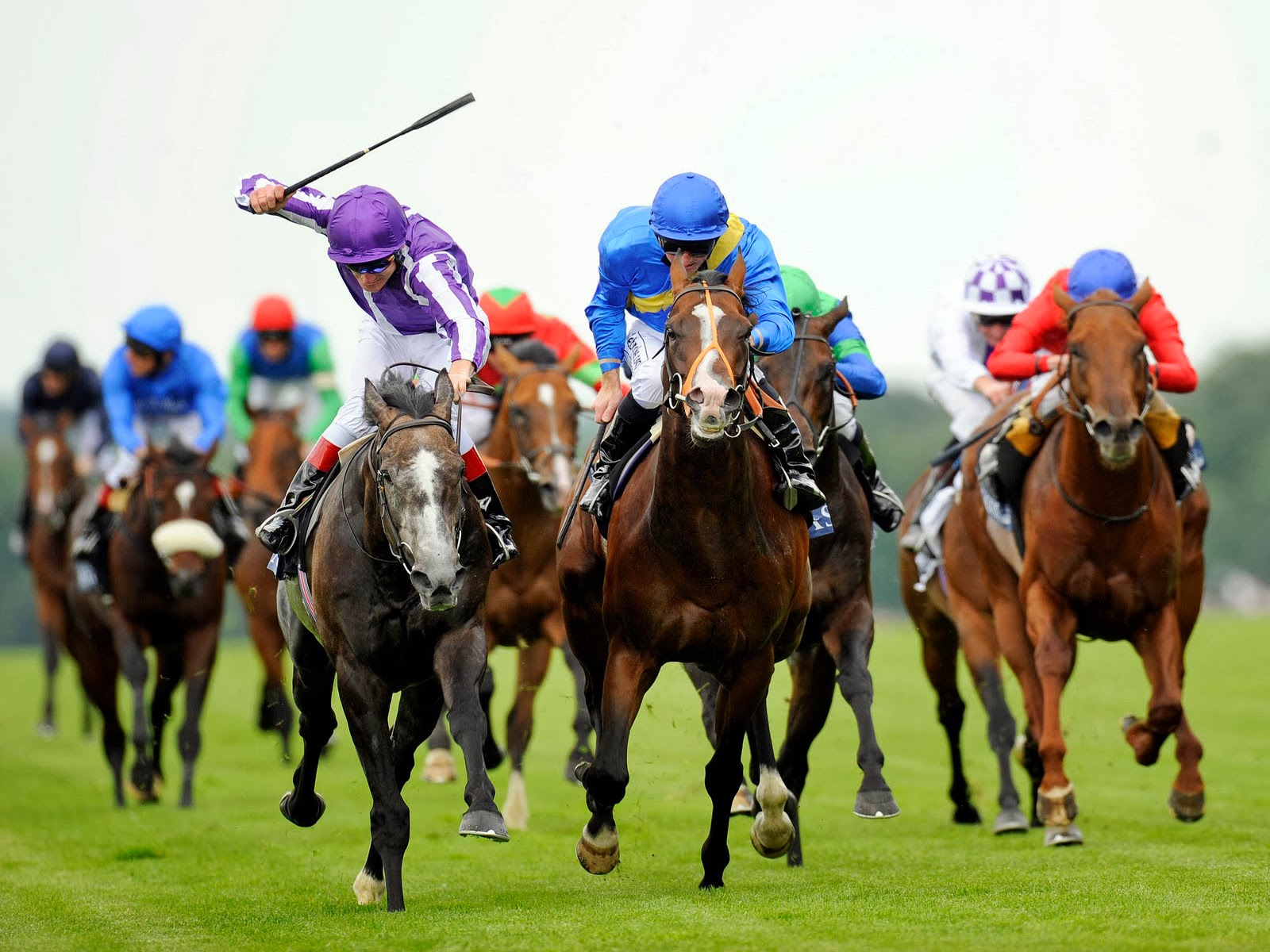 How To Be A Successful Horse Racing Gambler