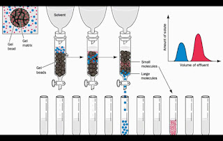 Gel filtration chromatography 膠質過濾色層分析,凝膠過濾層析