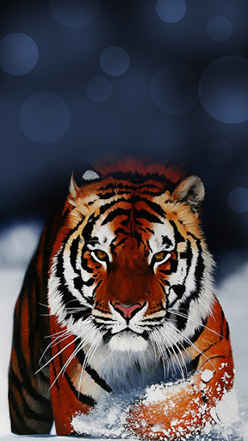 Tiger Wallpaper  Galaxy S7 Edge