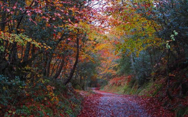 Rutas de Senderismo, Bosque de Peloño, Ponga