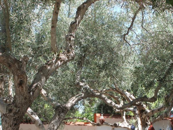 Ricordi di Viaggio: Creta #2