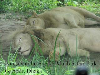 Bangabandhu Sheikh Mujib Safari Park