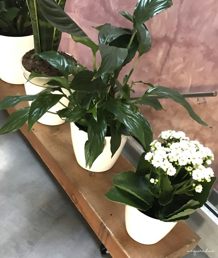 maguiandmi_plantas_diy_hogar