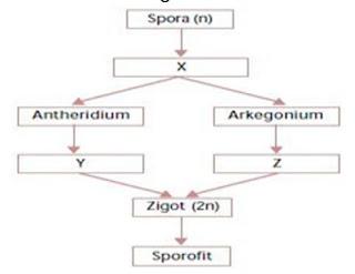 40 Soal Pilgan Sistem Reproduksi Manusia & Jawaban (Biologi)