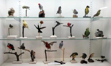 Museo de Arqueología, Antropología e Historia Natural de Ranrahirca