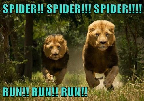 Spider! Run!