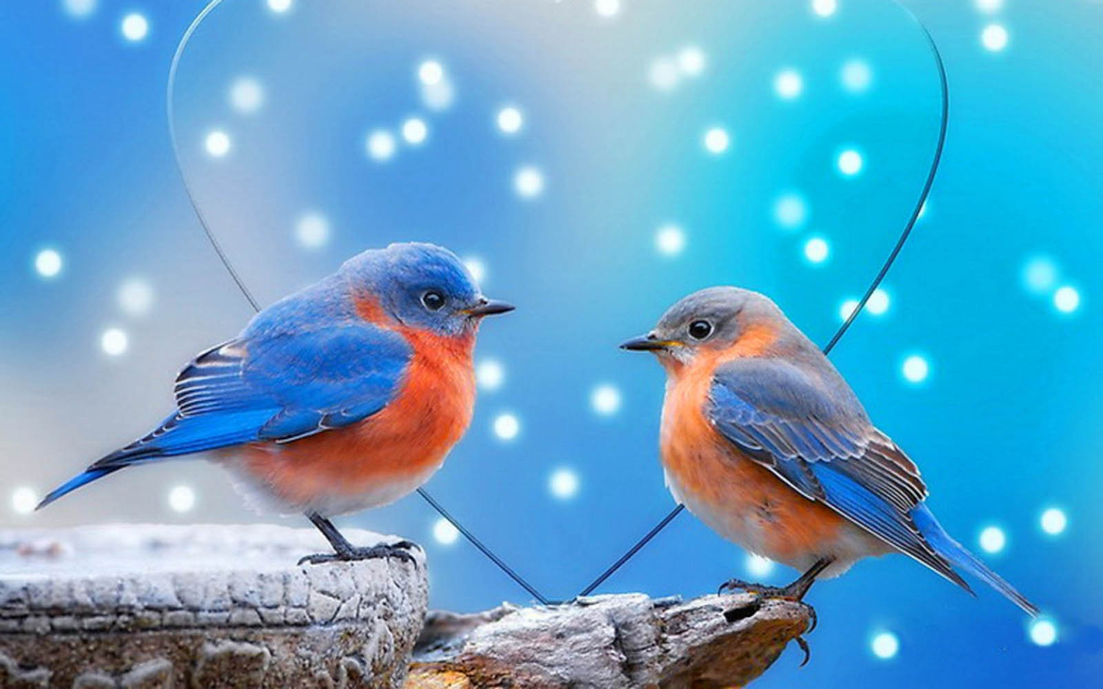 Dwnld Cute Little Bird Walpaper Free Fr Mobile: Love Birds Wallpapers:Image For Pc Wallpaper