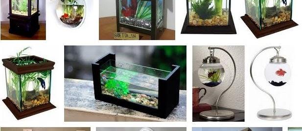 Aquarium Cupang Unik? Berikut Gambarnya yang Cantik