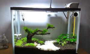 Daftar 8 Alat Penjernih Air Terbaik Untuk Aquarium