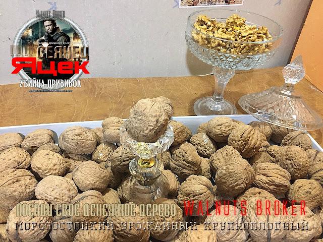 Саженцы грецкого ореха Яцек, 0985674877, 0957351986, Walnuts Broker