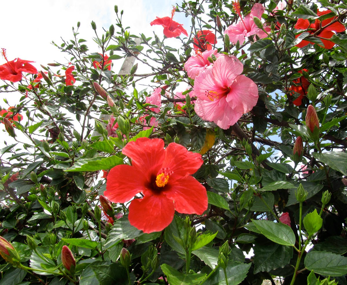 Hibiscus In Spanish Mitchell Is Moving: Speaking Of Urology