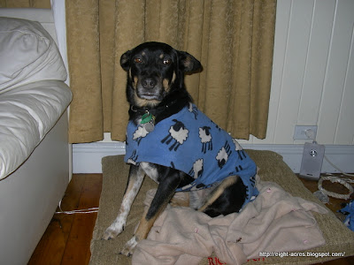 eight acres: sewing dog coats