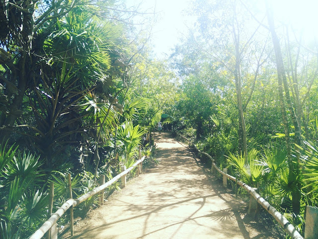 Taking a walk in the forest in Auroville