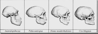 Types of Ancient Humans in Indonesia