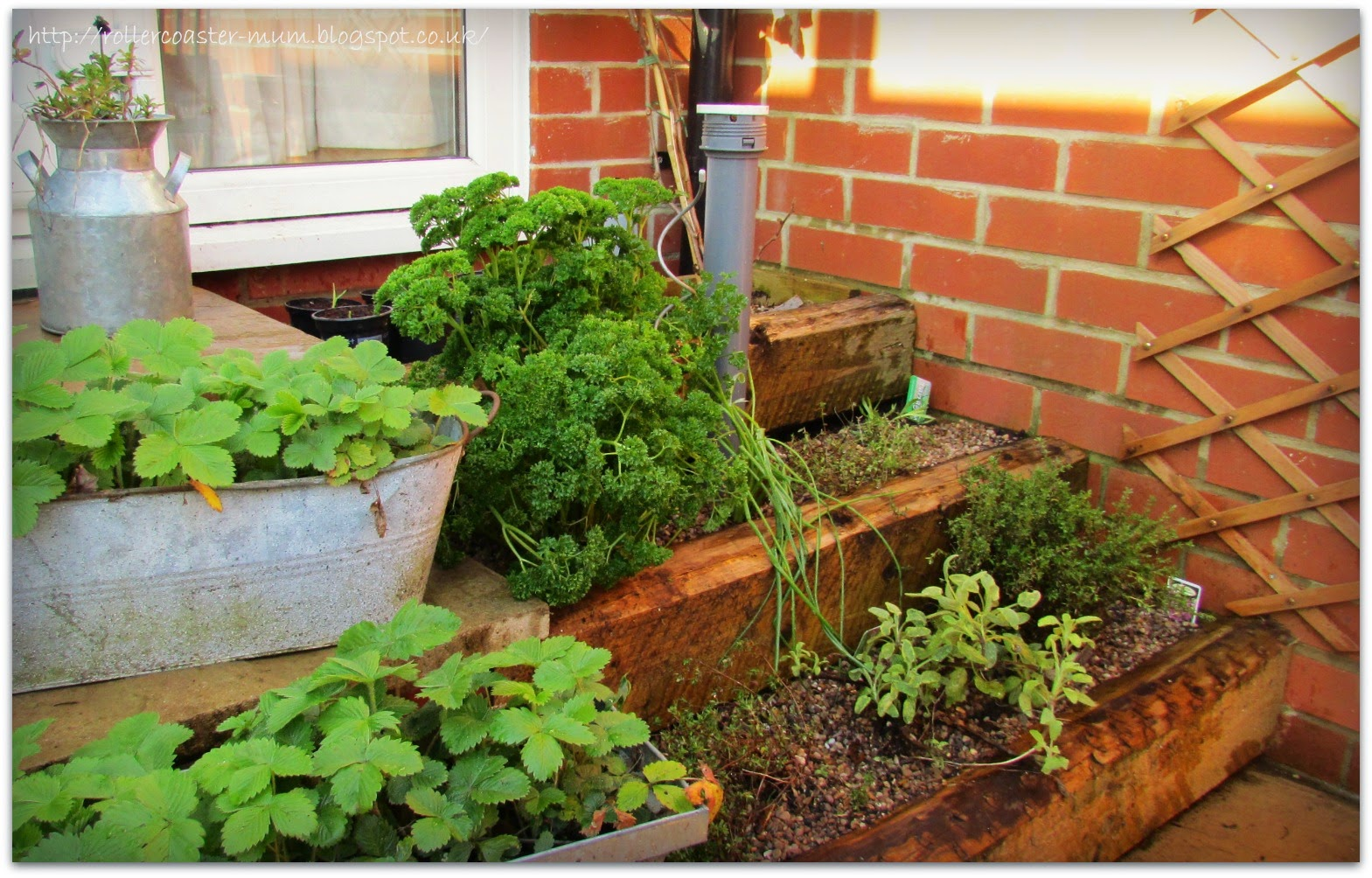 stepped herb bed