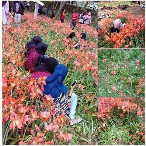 kebun bunga puspa jogja