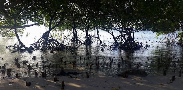 Mangrove on the Beach at Pacman Beach Resort Complex
