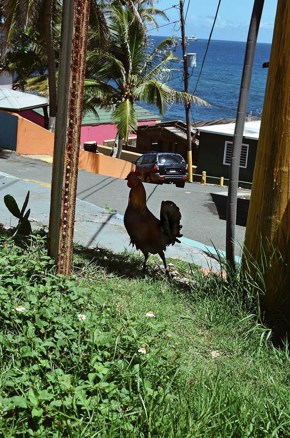 La Perla Old San Juan