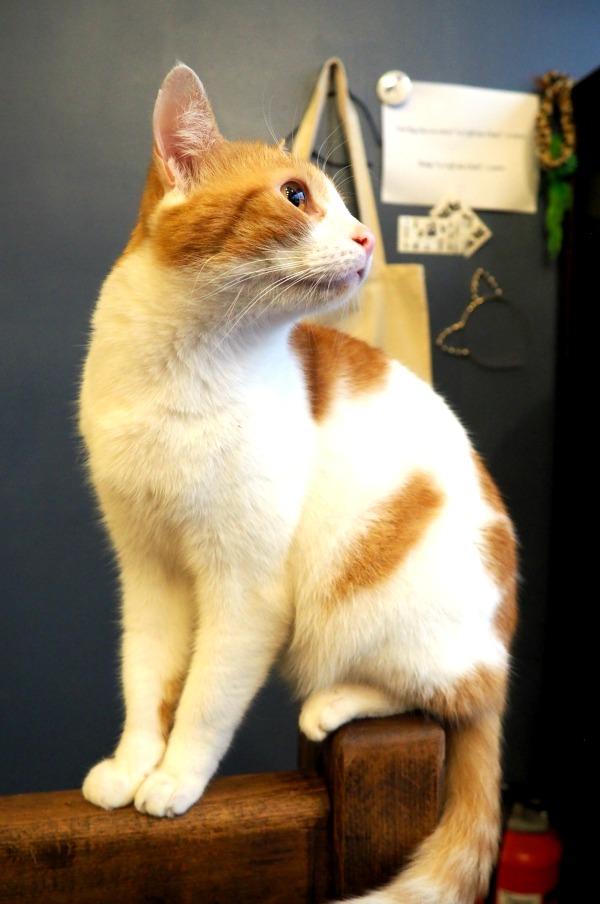 plus beau chat de paris