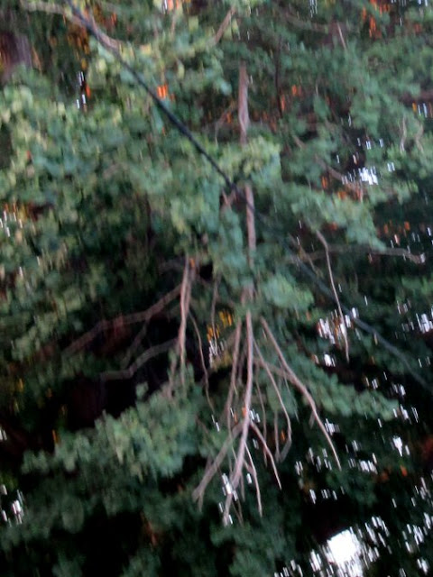 落ちそうな枝