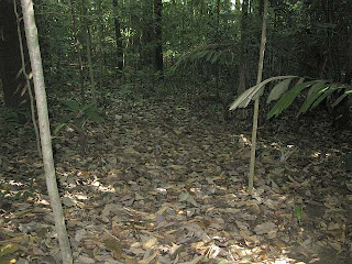 Leaf litter covered forest floor