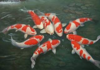 Cara Merawat Ikan Koi Agar Cepat Tumbuh Dengan Besar
