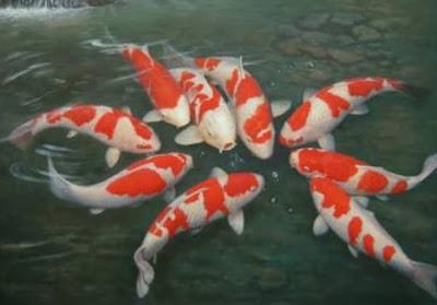 Ikan Koi di kolam