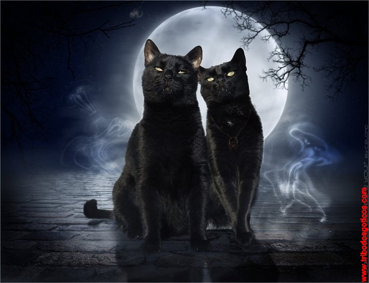 Two Black Cats Meaning