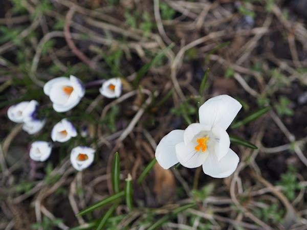227. Wiosna w moim ogrodzie - GALERIA