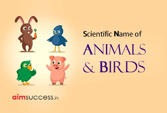 List of Scientific Name of Animals and Birds