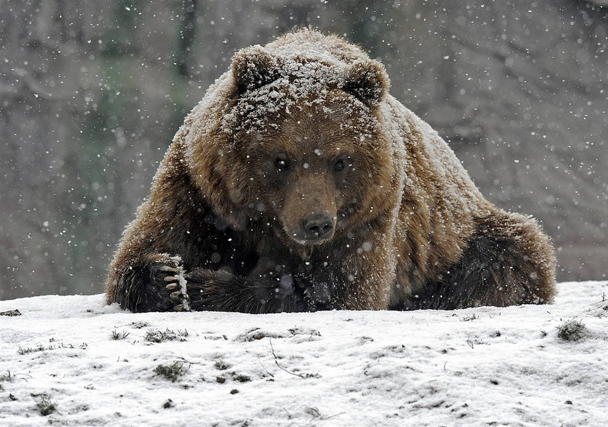 the thoughts of a big brown bear february 2012. Black Bedroom Furniture Sets. Home Design Ideas