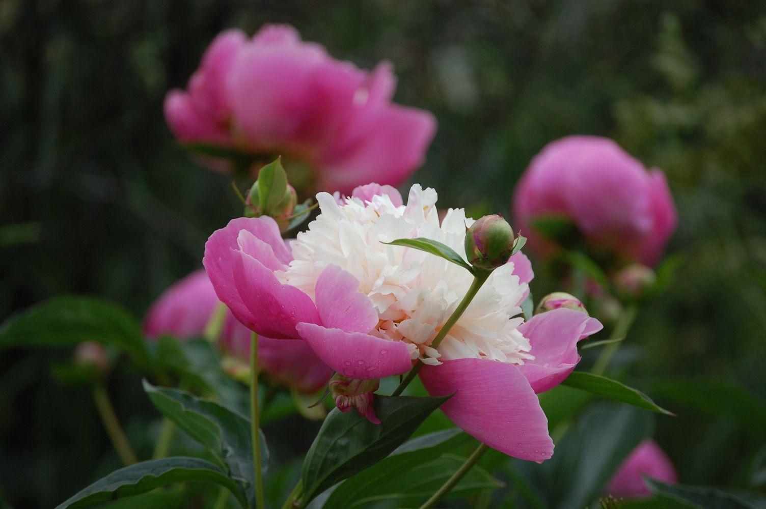 avointen puutarhojen päivä 2015