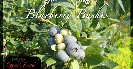 How to Prep Blueberry Bushes