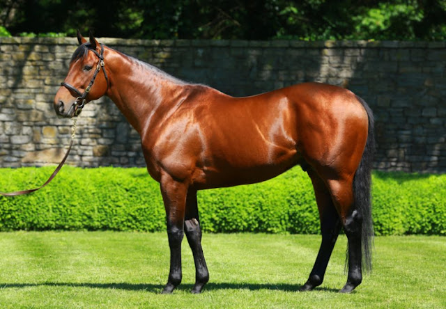 american pharoah winner of the triple crown of horse raciing standing in the grass for a photo